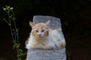 Katzensiesta