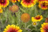 RiggJ_003-1_Blumen