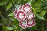 RiggJ_003-3_Blumen