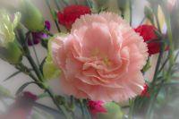 RiggJ_003-5_Blumen
