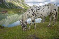 RiggJ_004-2_Zuersersee-Pferd